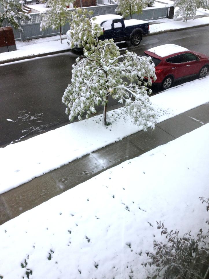 September Snow